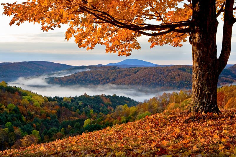 Golden leaves and valley fog in central New England on autumn day.on autumn day.