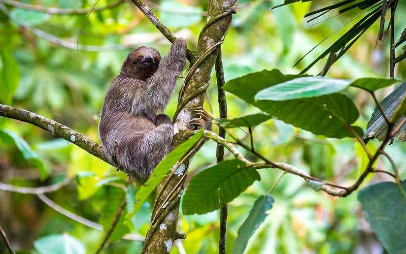 Spend your days watching sloths at this luxury Costa Rican resort