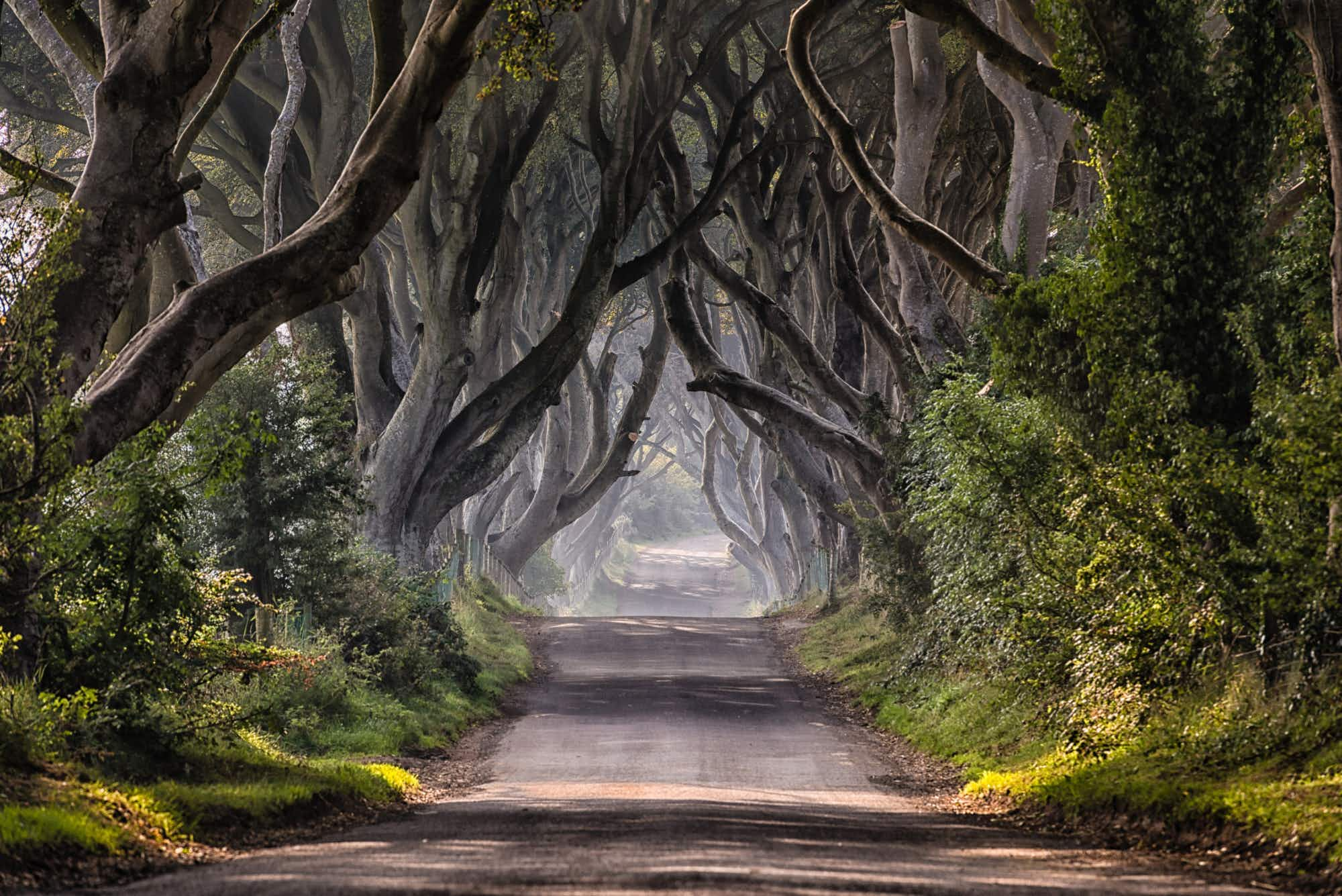 Game of Thrones' Dark Hedges will soon be traffic free