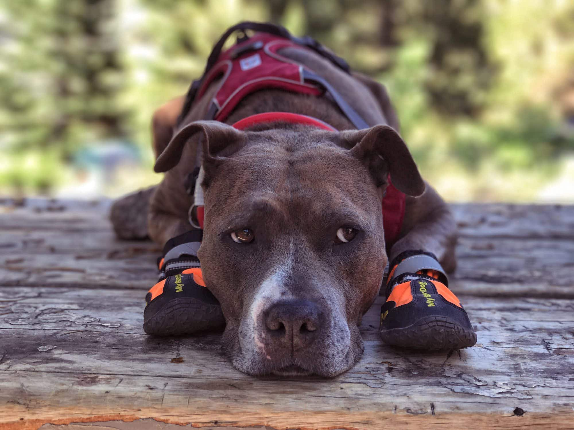 How this once abused rescue dog became a hiking Instagram star