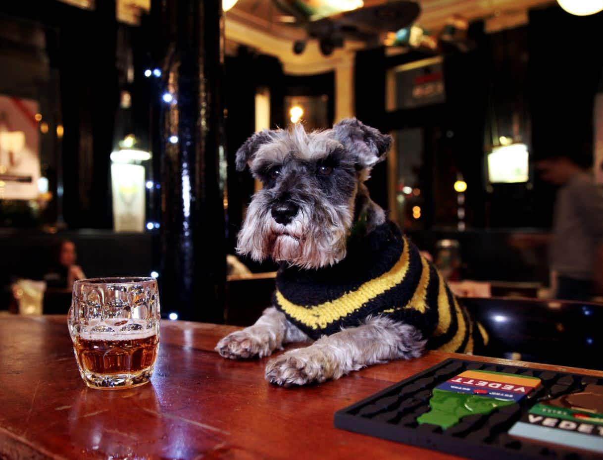 Say hello to Britain's adorable pub-dwelling dogs