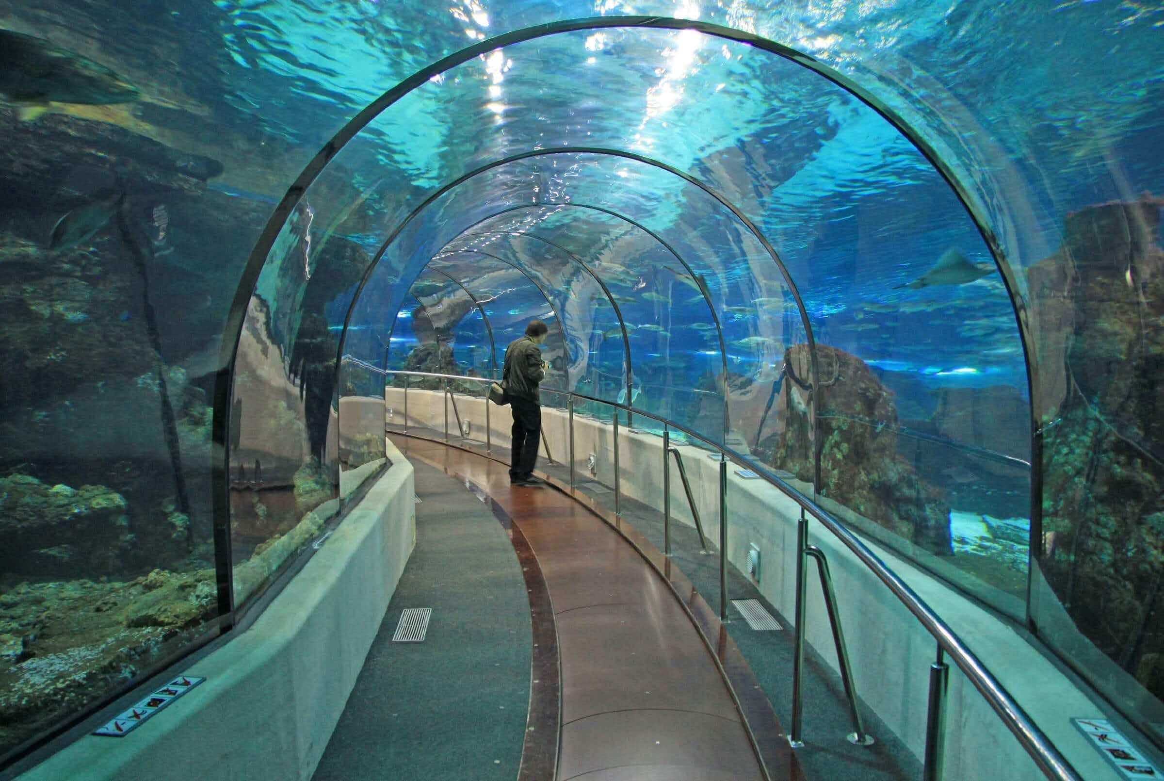 Dubai airport's security clearance will soon be a virtual aquarium