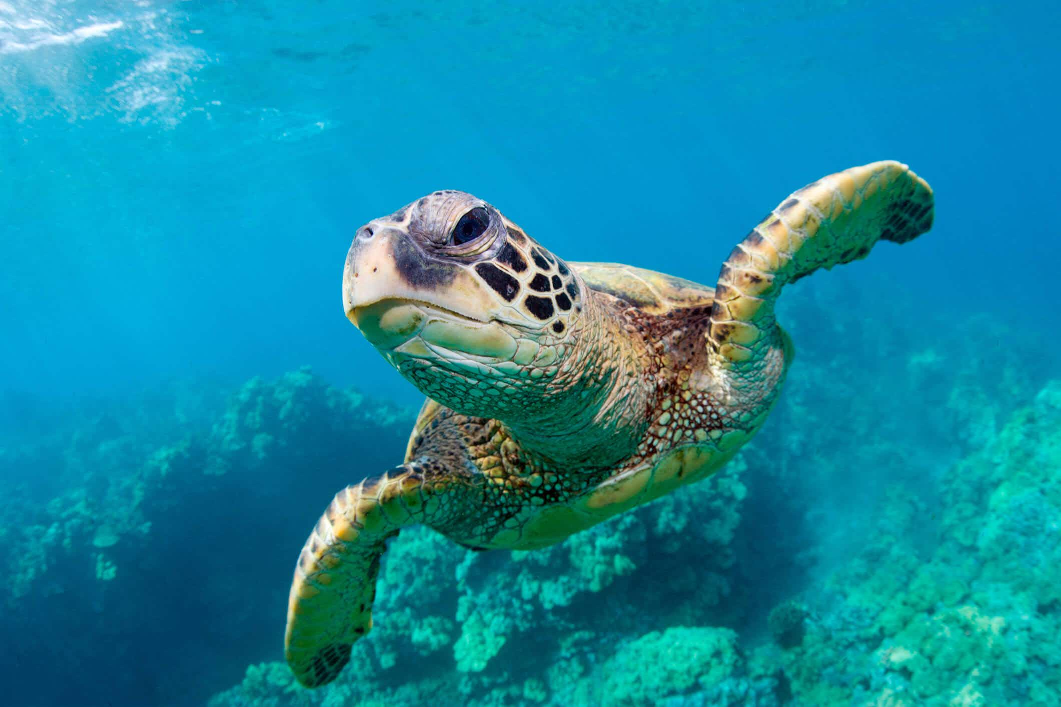 Sea turtle numbers on the rise with worldwide conservation success