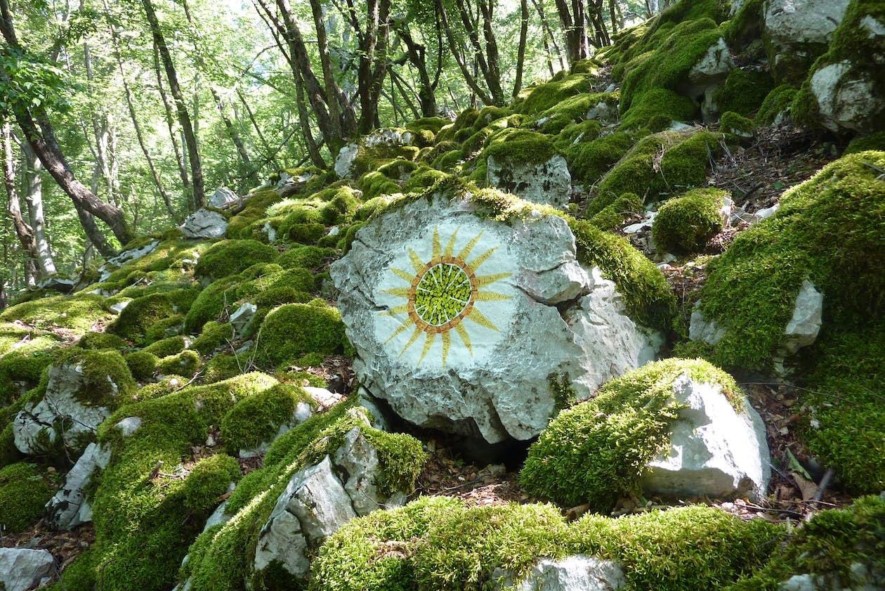 Moss I. Photo by Boris Pecigoš