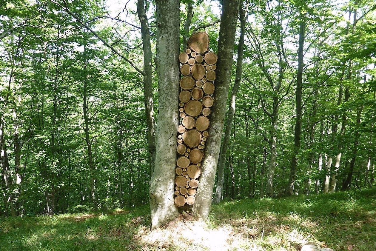 'Sentinel' natural installation. Photo by Boris Pecigoš