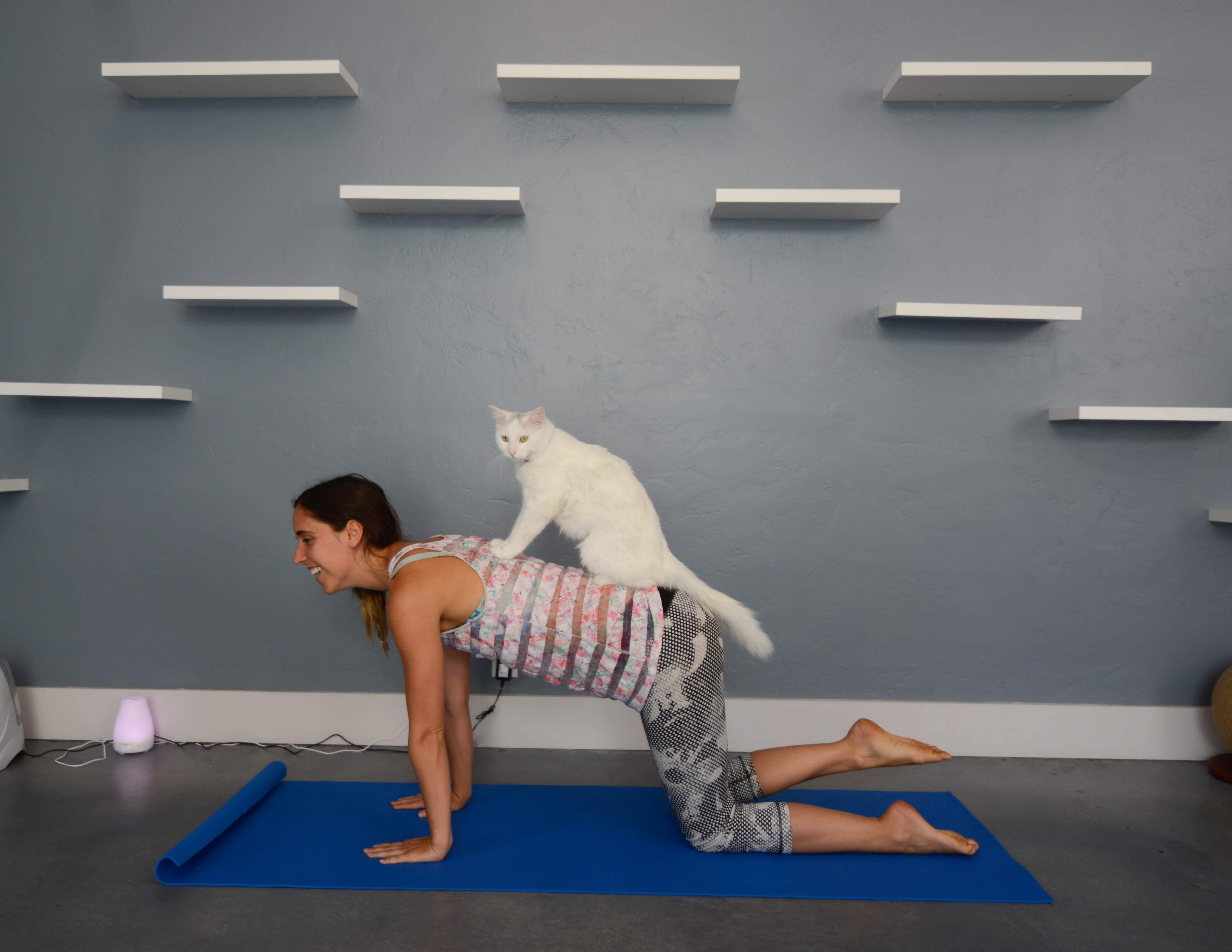 Take yoga with feline friends at Santa Barbara's first ever cat café