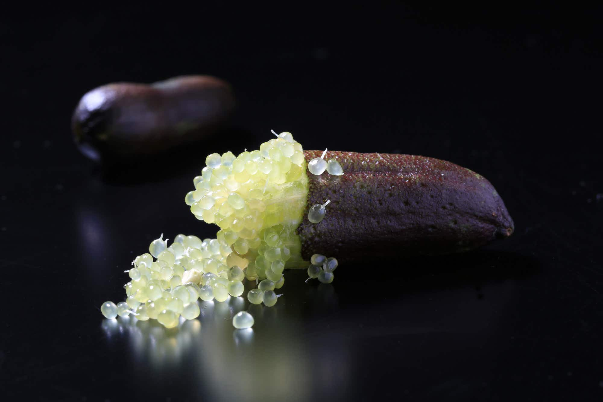 Why Aboriginal Australian finger limes are filling up Instagram feeds