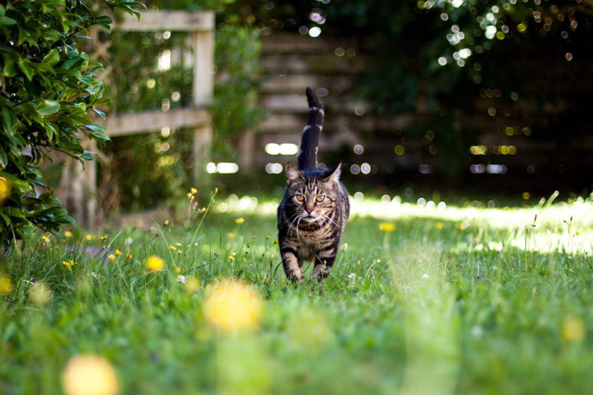 New Zealanders asked to leave their cats at home on holidays
