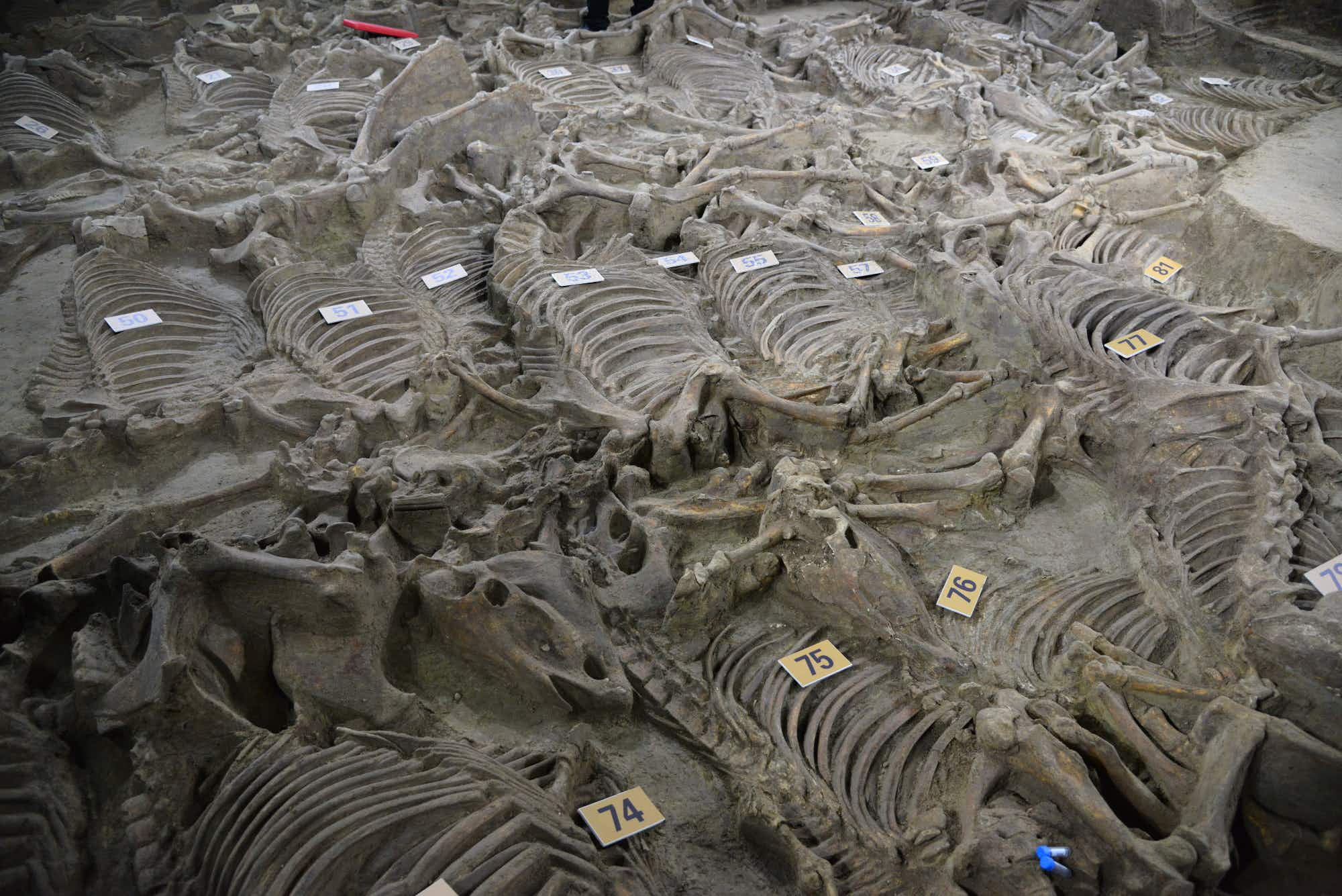 A huge tomb full of ancient chariots unearthed in central China