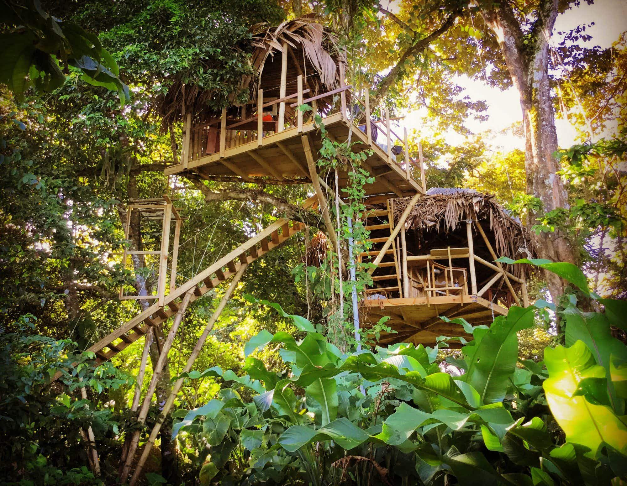 Spend a night in an incredible tree house in Panama