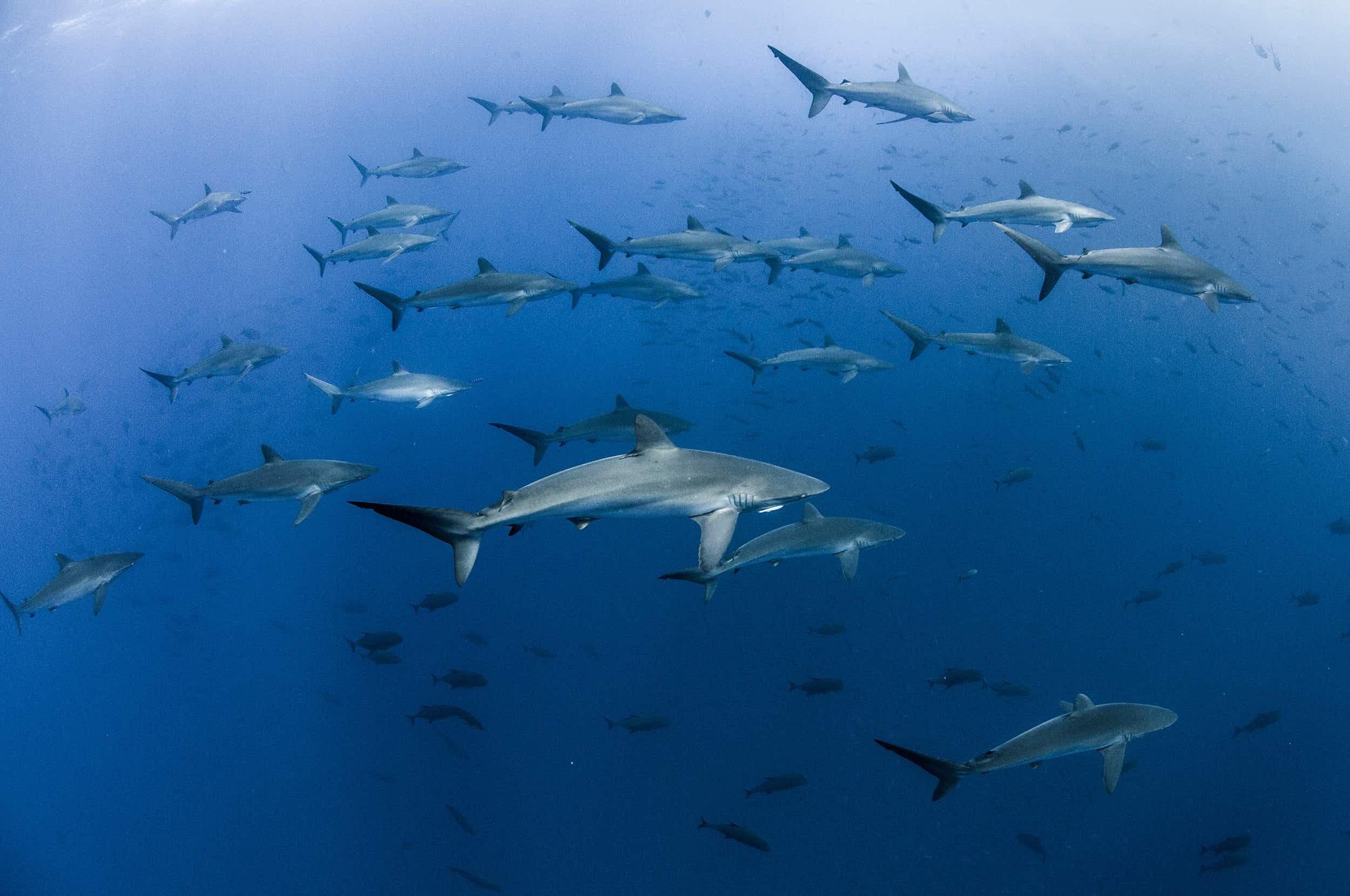 Mexico creates massive marine park off the Baja Peninsula