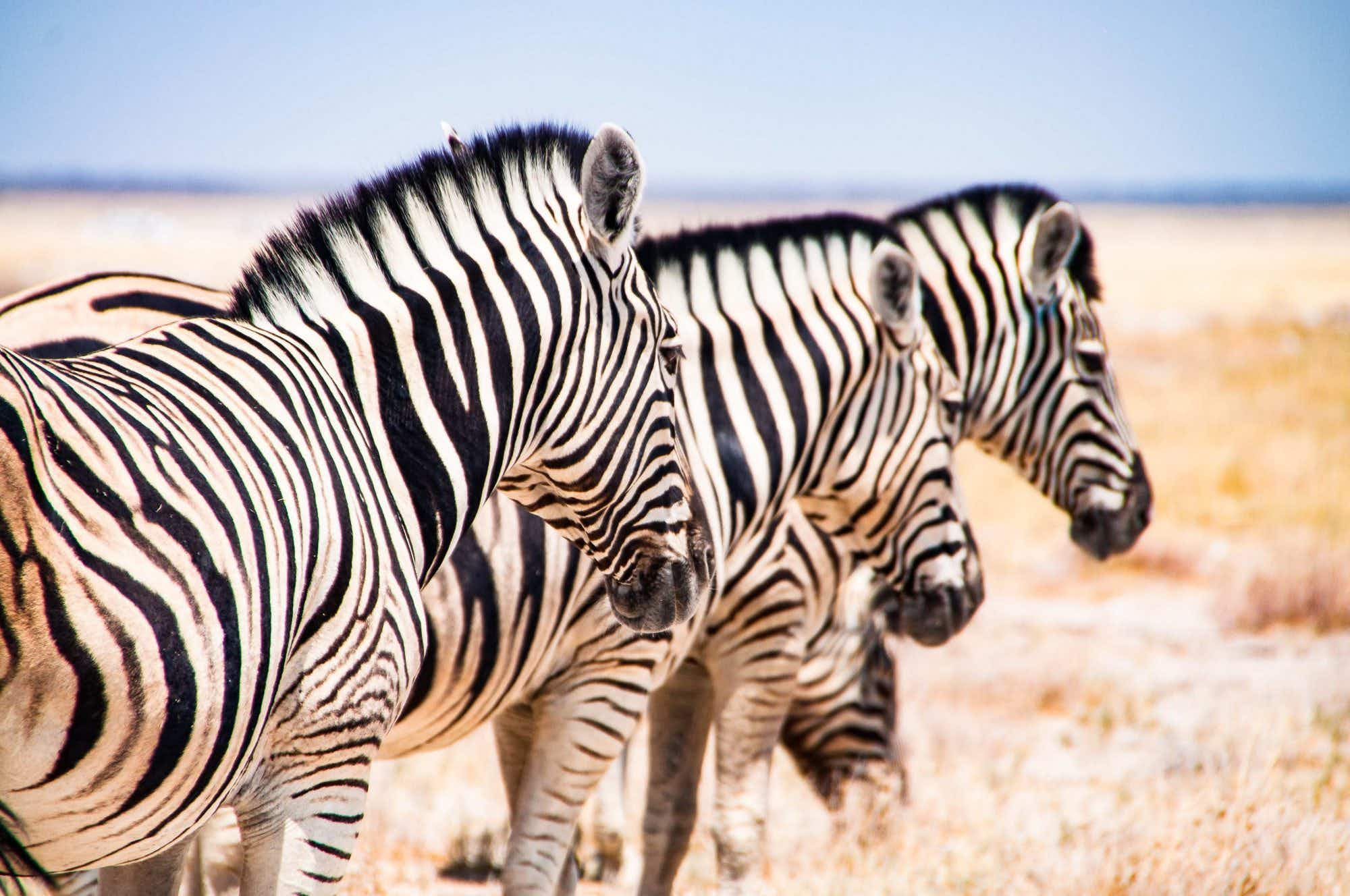 A photographer shares incredible up close photos from Namibia trip