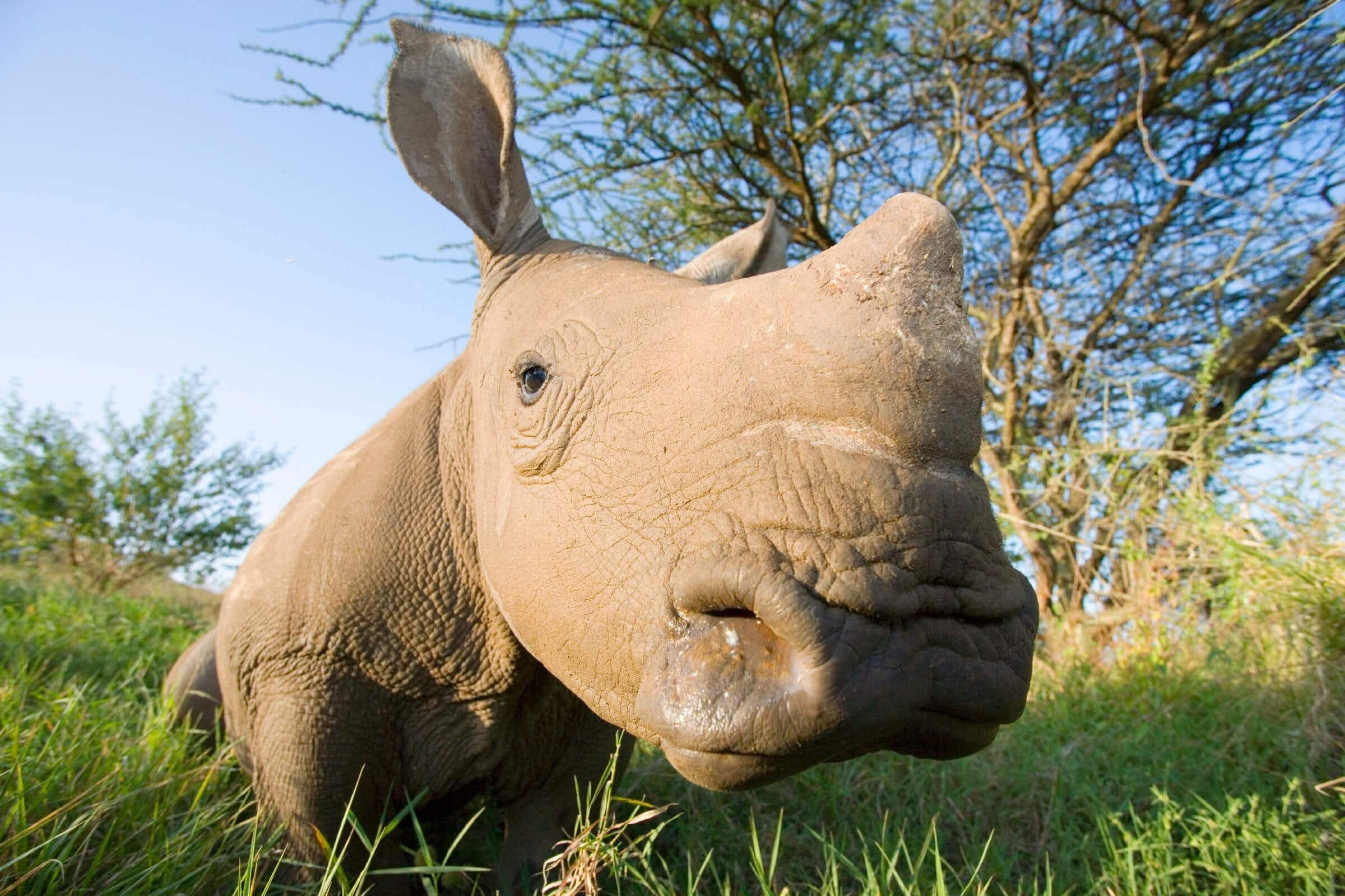 You can walk with black rhinos at this unique Kenyan safari