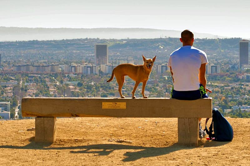 Hike Runyon Canyon in West Hollywood in the company of