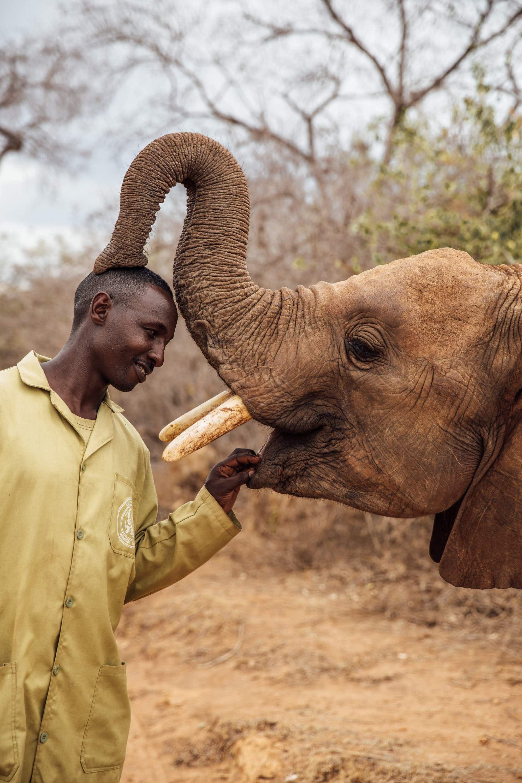 Wildlife trust in Kenya celebrates 40 years of elephant rescue