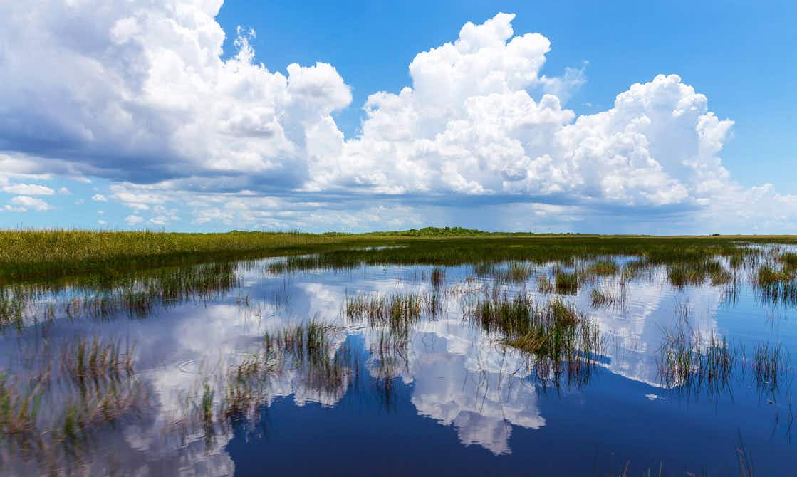 Why the wetlands of Florida's Everglades continue to be the most endangered site in the US