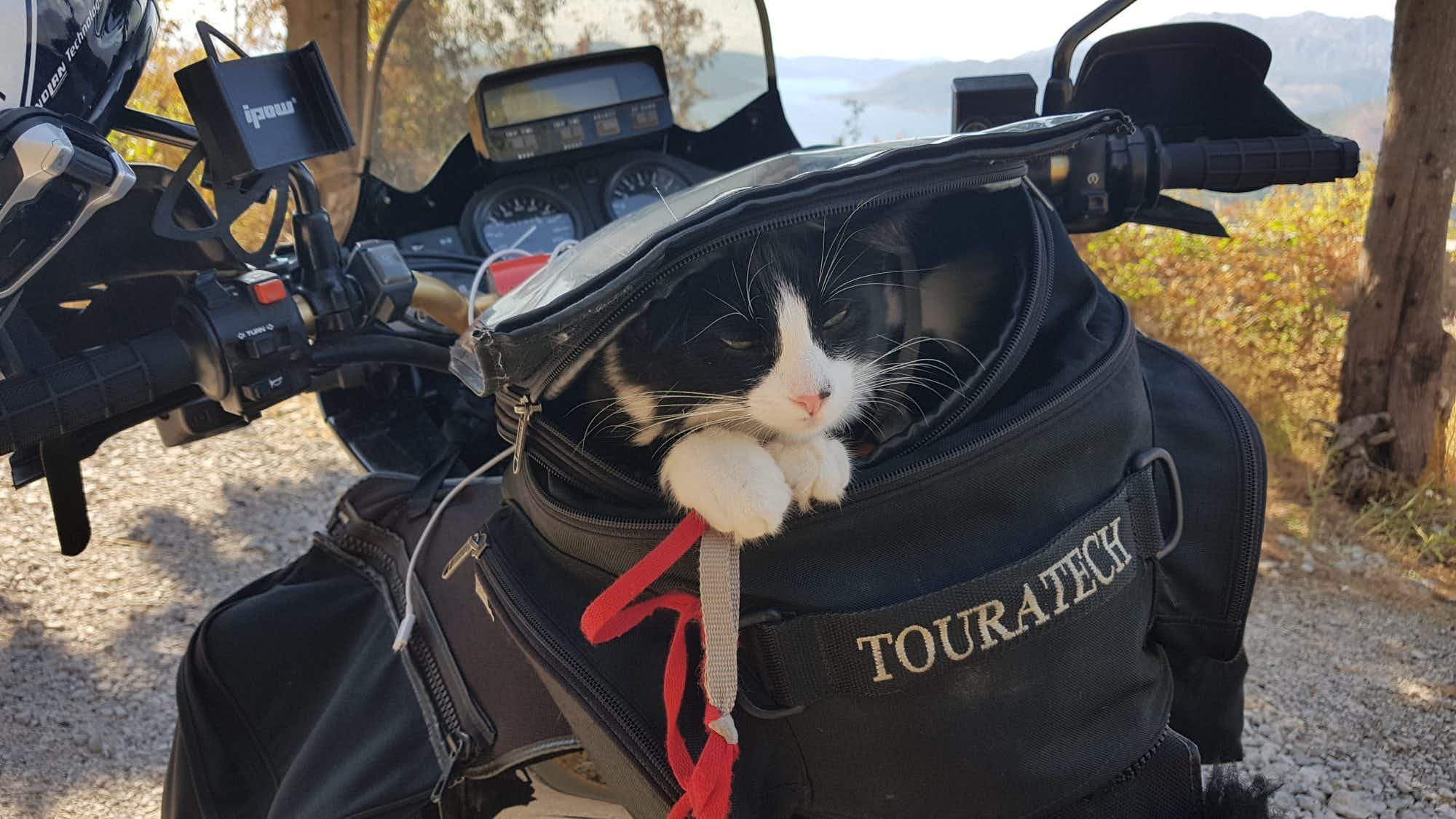 From Germany to Dubai on a motorbike - with a rescue cat on board