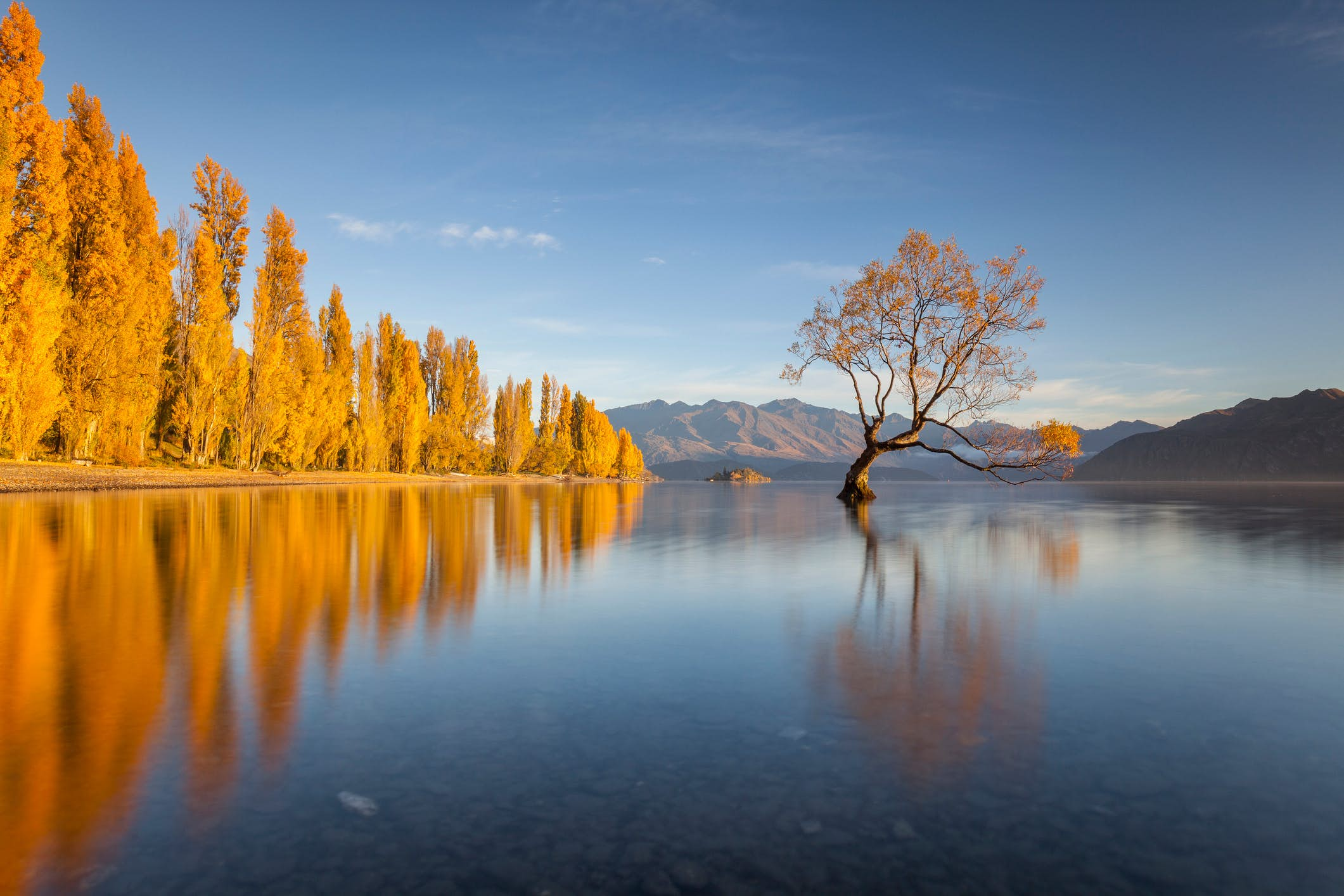 How you can help protect New Zealand's Instagram-famous Lake Wanaka tree -  Lonely Planet