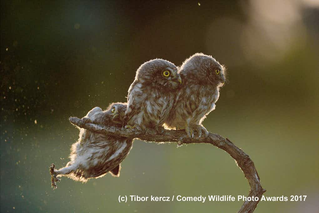 See the pictures that have the wildlife photographers giggling