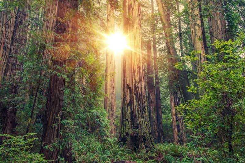 See California's redwood forests for free and help protect them into the future