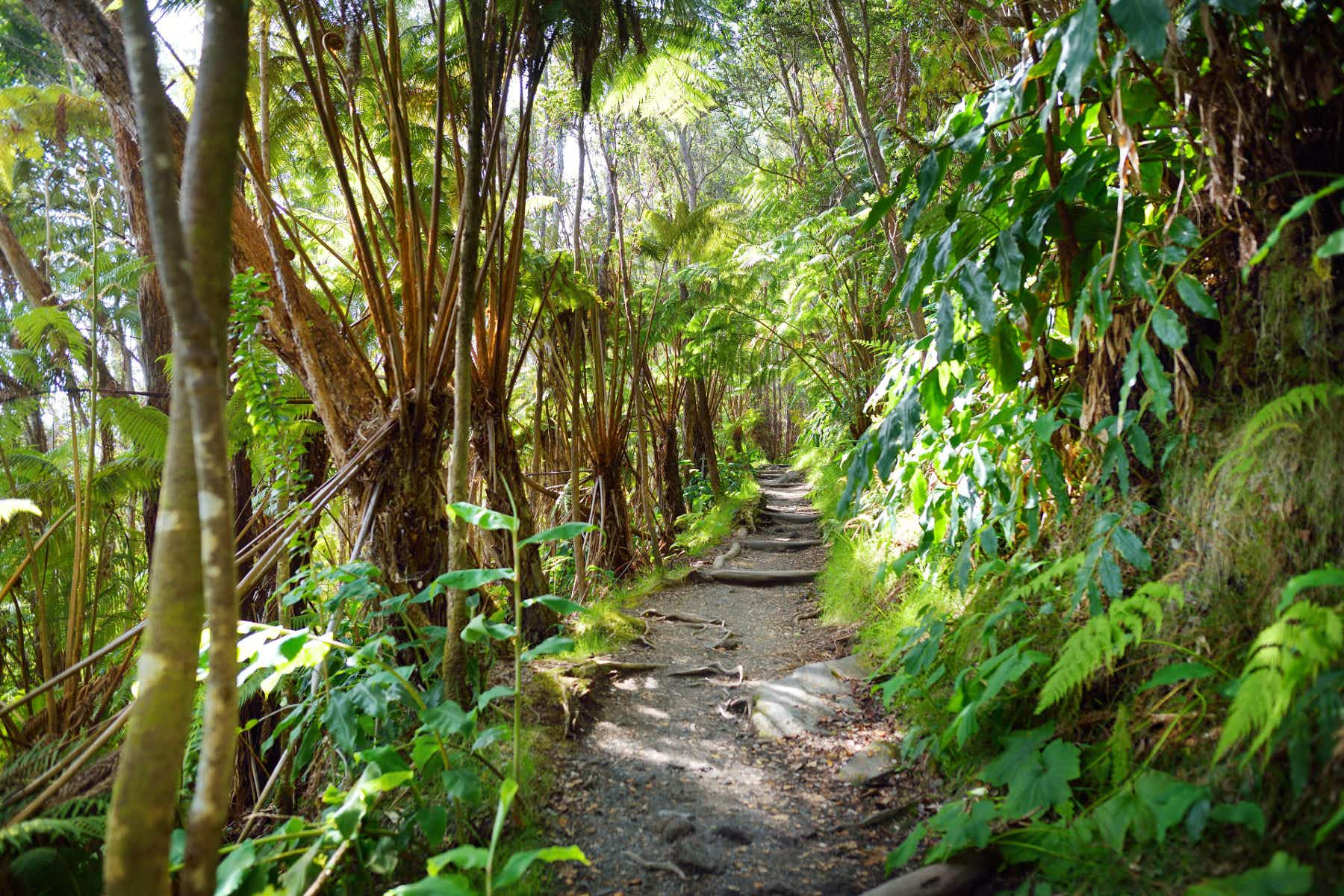 Hawaii has an ambitious plan to restore its forests