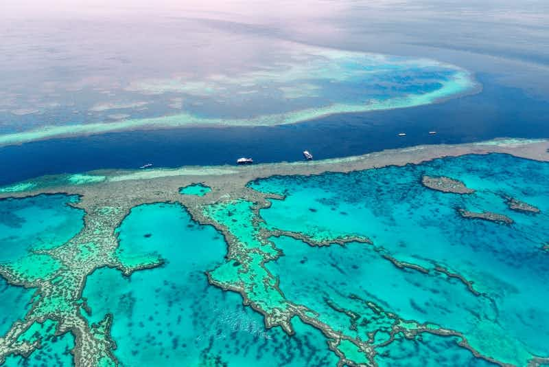 Australia will pay for ideas on how to save the Great Barrier Reef