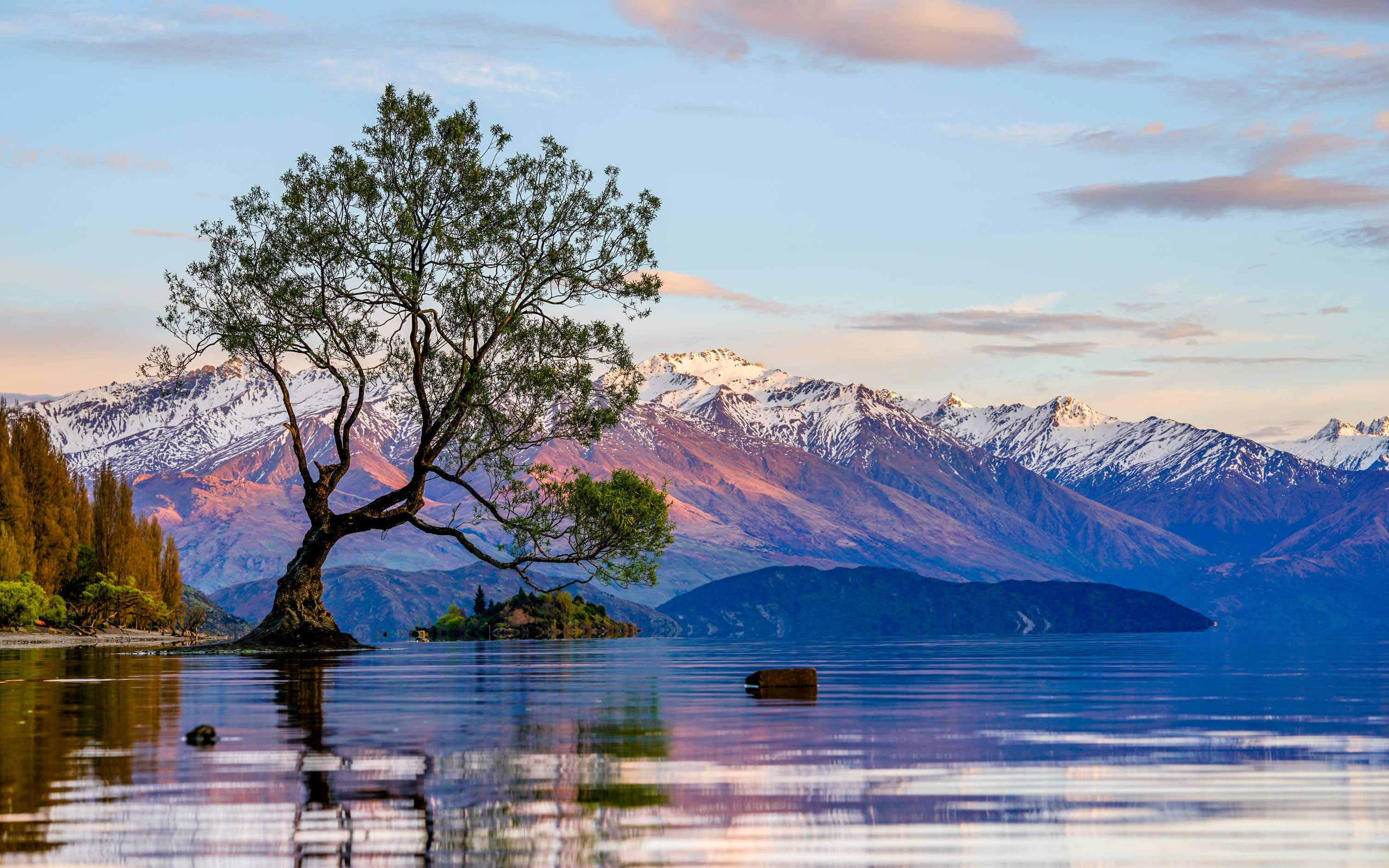 How you can help protect New Zealand's Instagram-famous Lake Wanaka tree