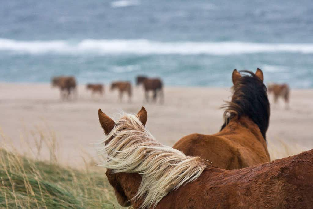 A photographer has captured the beauty of the wild horses of Sable Island