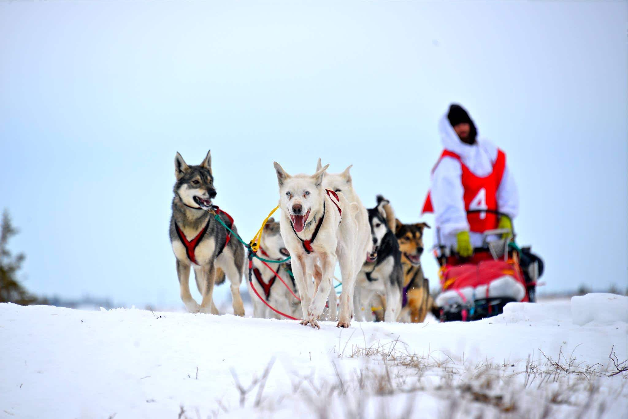 One man is traveling 3000 kilometres across Canada by dog sled
