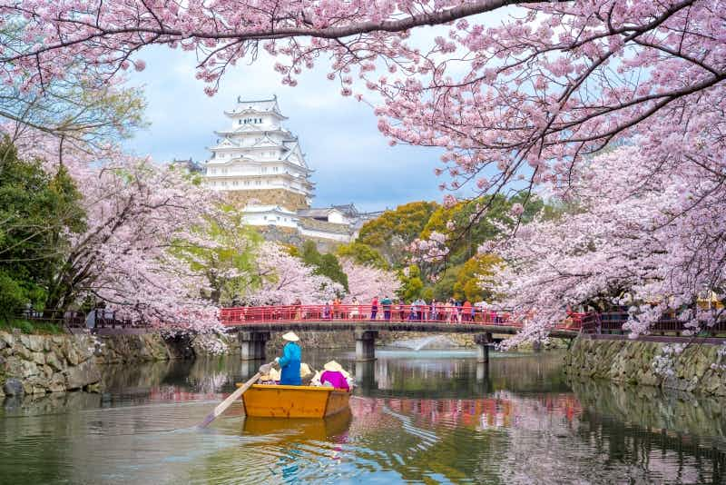 The Japanese cherry blossom forecast for 2018 has just been released