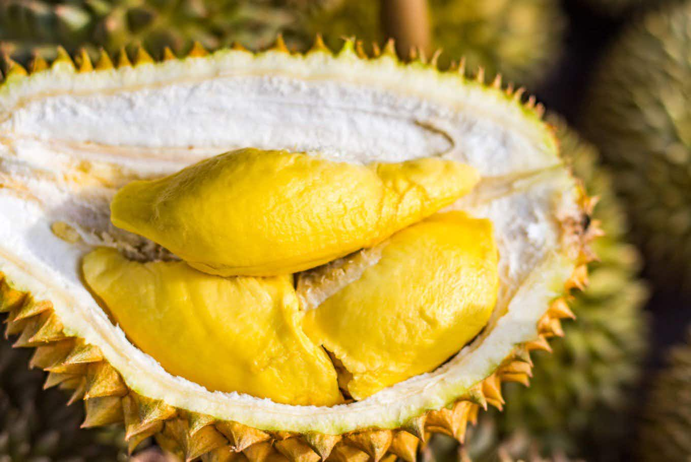 Melbourne is hosting a festival dedicated to the super smelly durian fruit