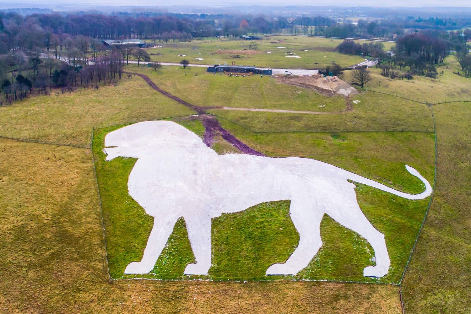 Whipsnade Zoo's famous hillside chalk lion has been restored to glory