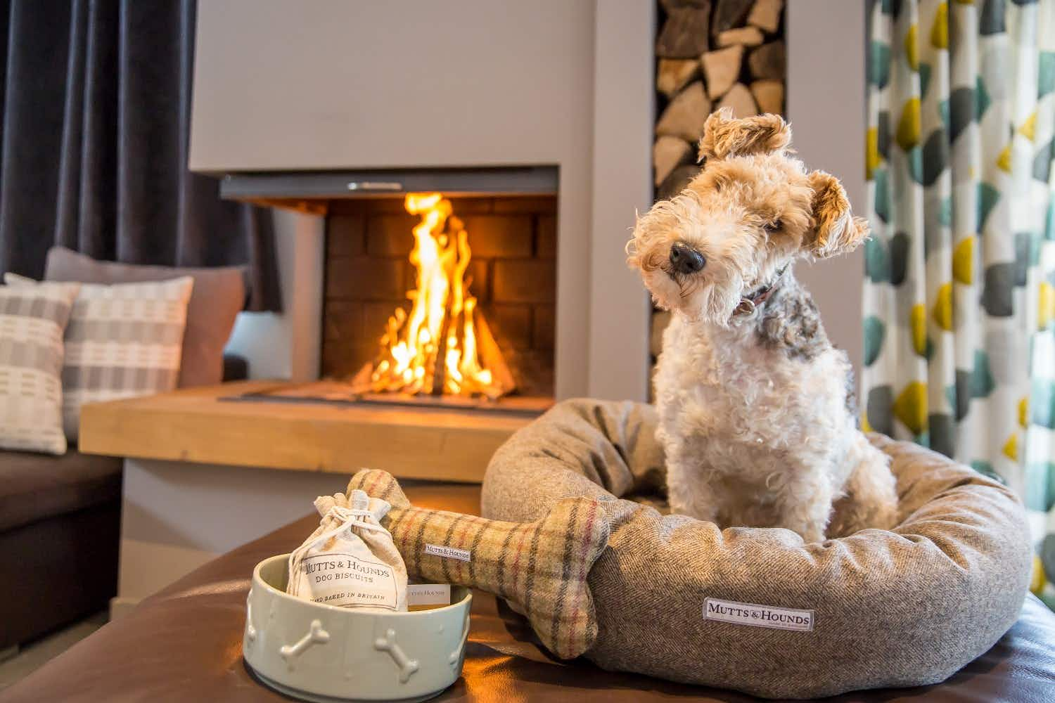A new package for dogs will see your pet being pampered in the French Alps