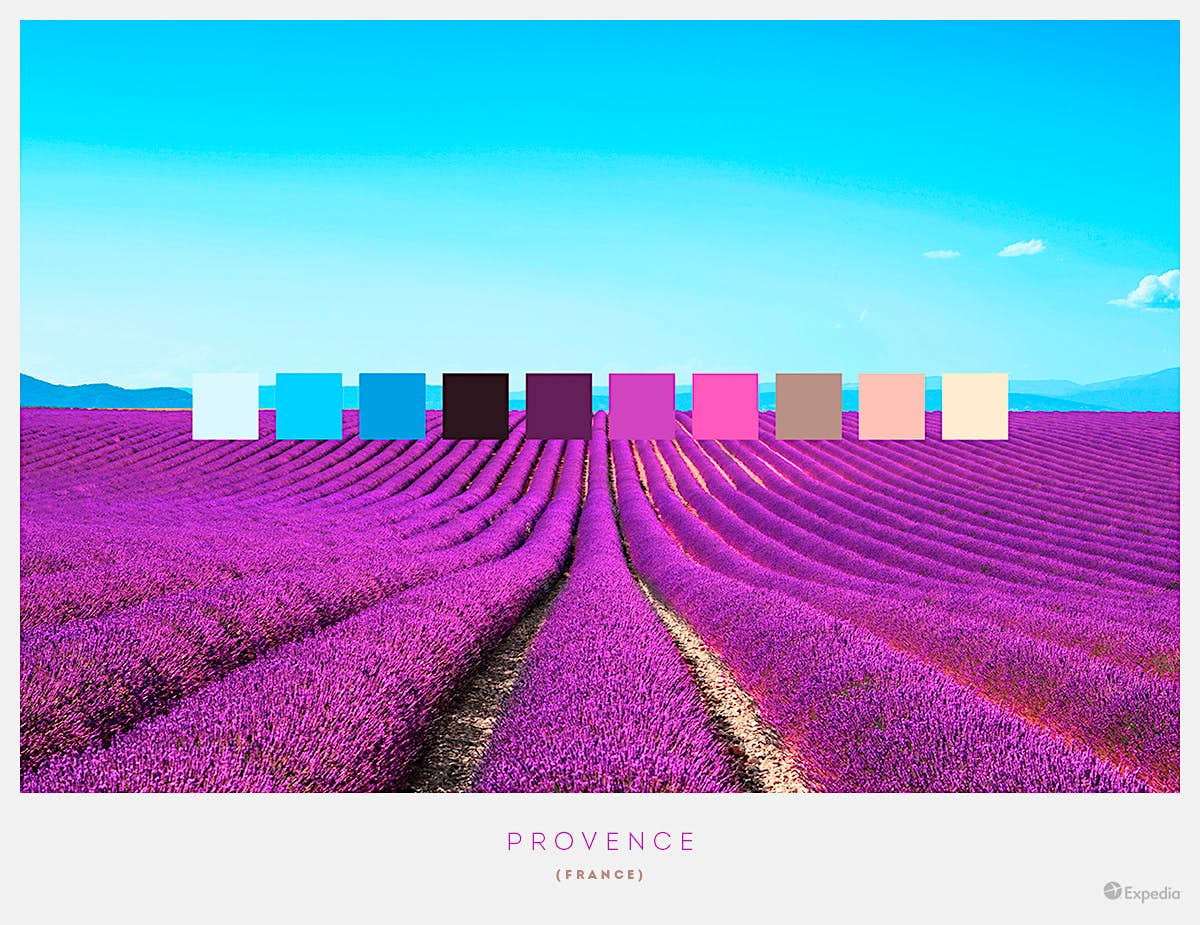Provence, France. On Display in June and early August, one of the most famous sights in Provence and the Côte d'Azuris the rolling fields of rich, purple lavender. Image by Expedia