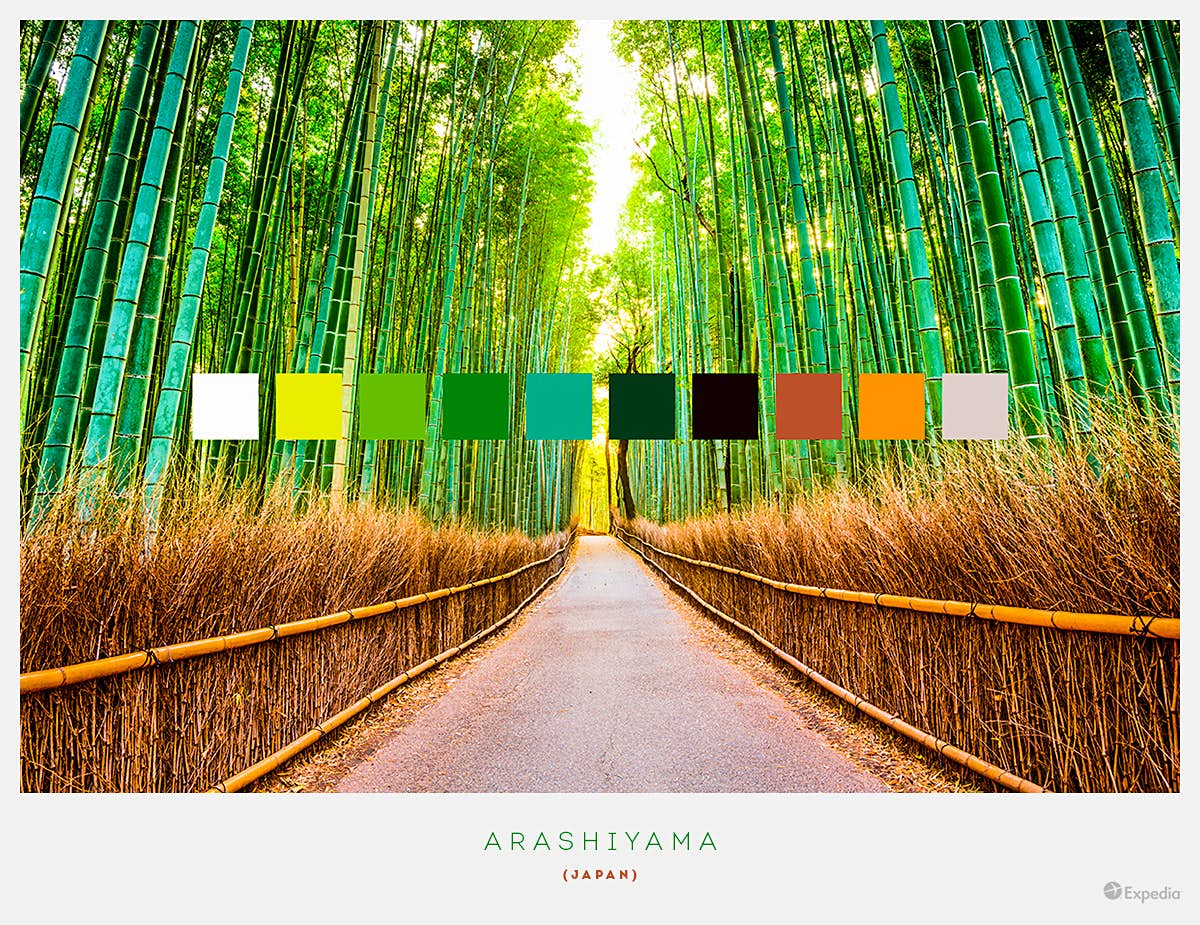 Arashiyama, Japan. One of the most popular sites in Kyoto by far, the world-famous bamboo grove sees green stalks towering over tourists that visit there.