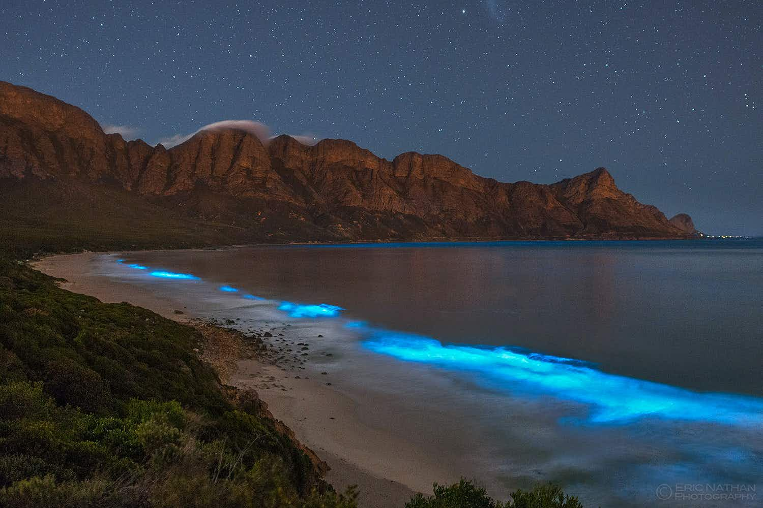 See South Africa's twinkling bioluminescence captured in a beautiful video