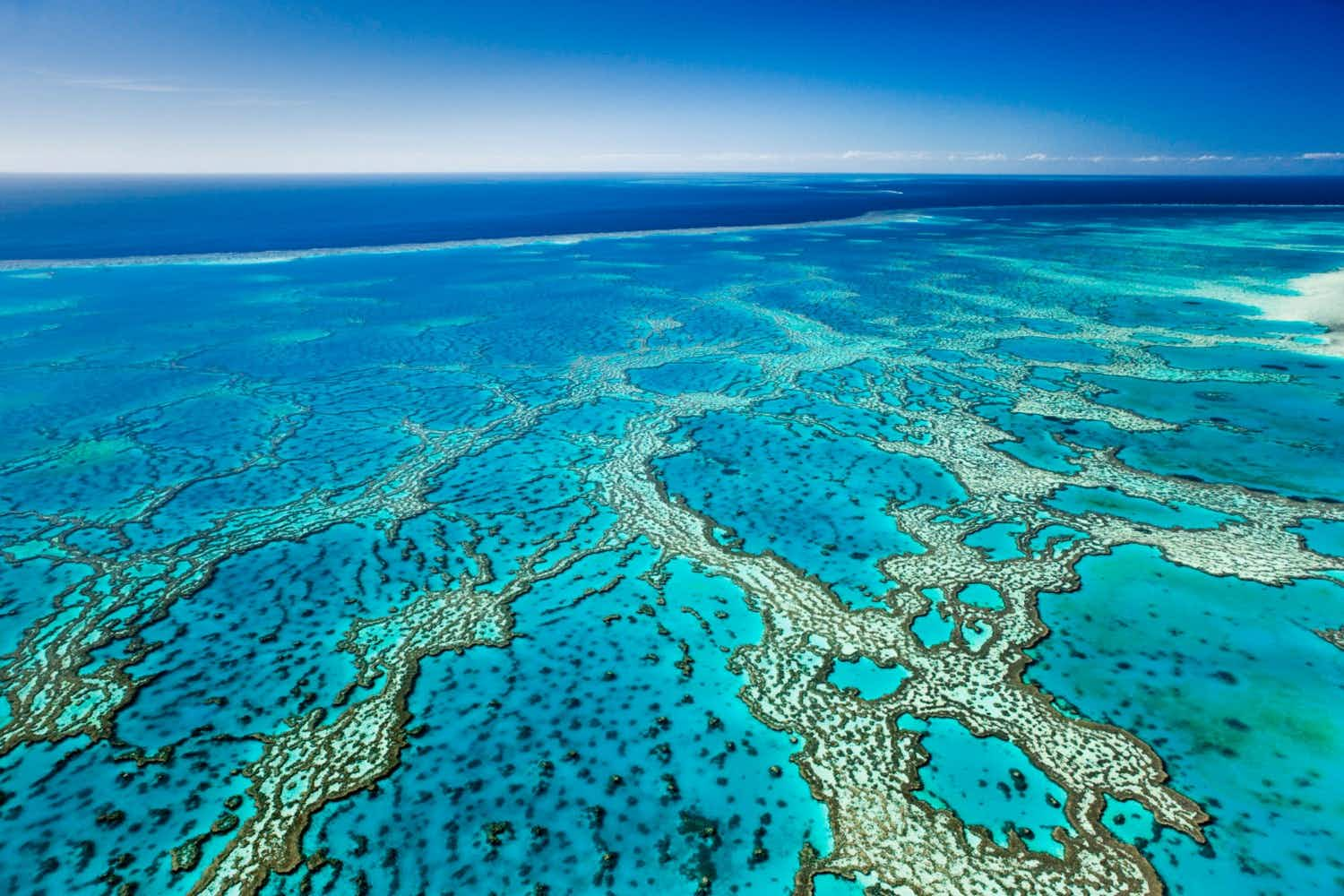 This ambitious new project may help to save Australia's Great Barrier Reef