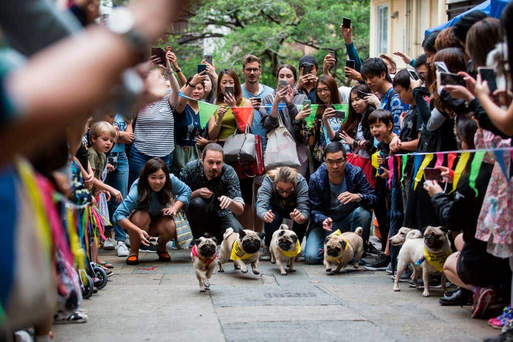 Hong Kong's first Doggie Dash raises money for abandoned pups