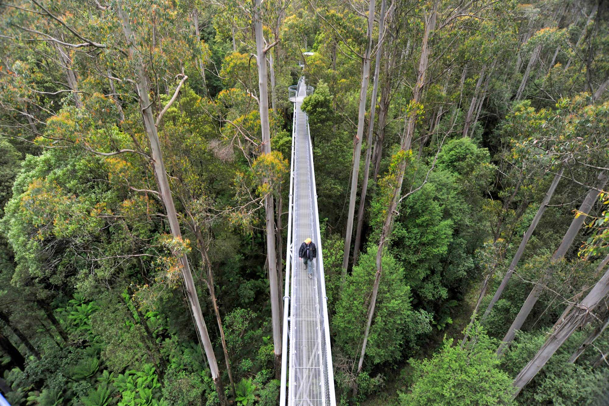An off-grid eco zipwire park has opened on the Great Ocean Road in Australia