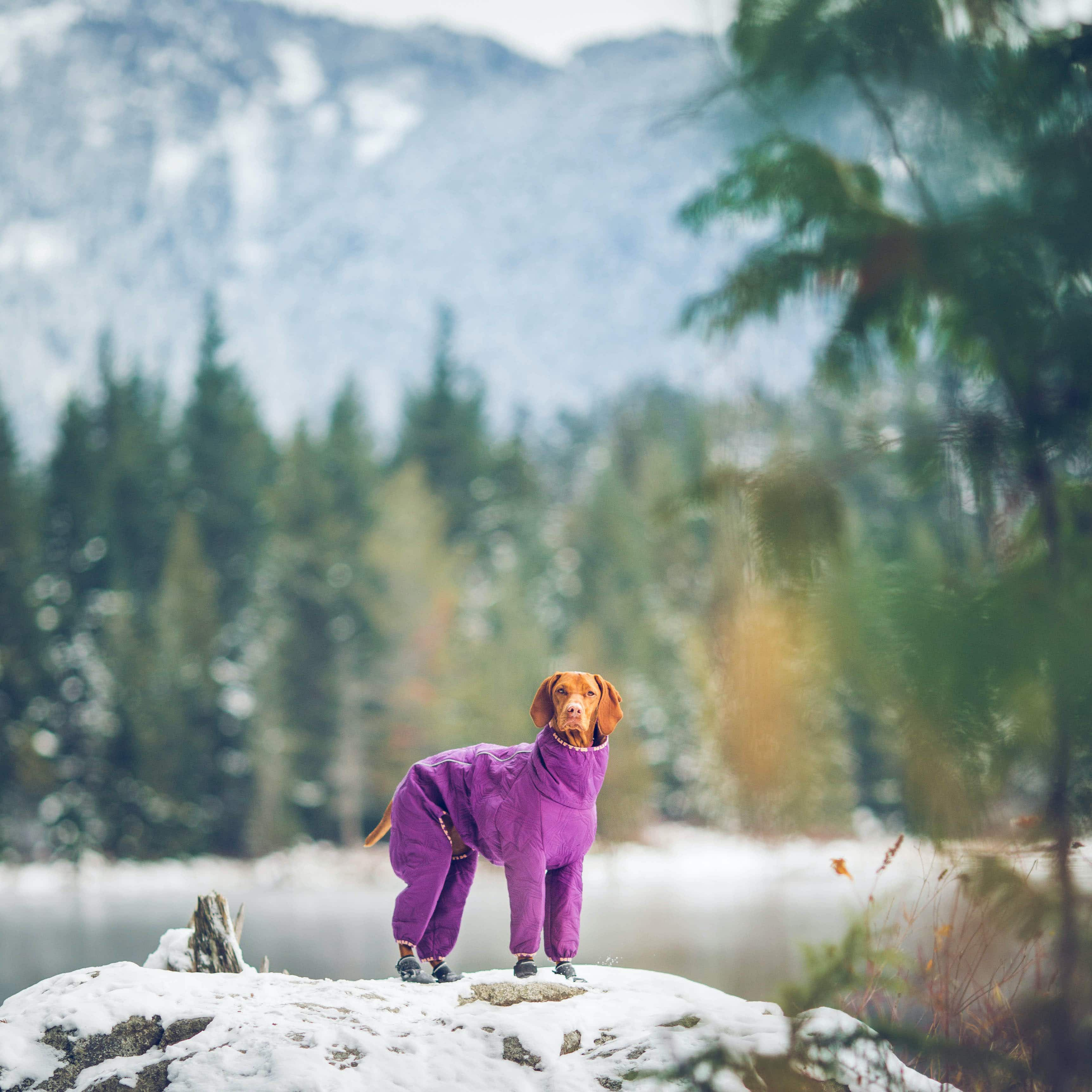 This adorable Hungarian Vizsla is the perfect companion for a weekend hike