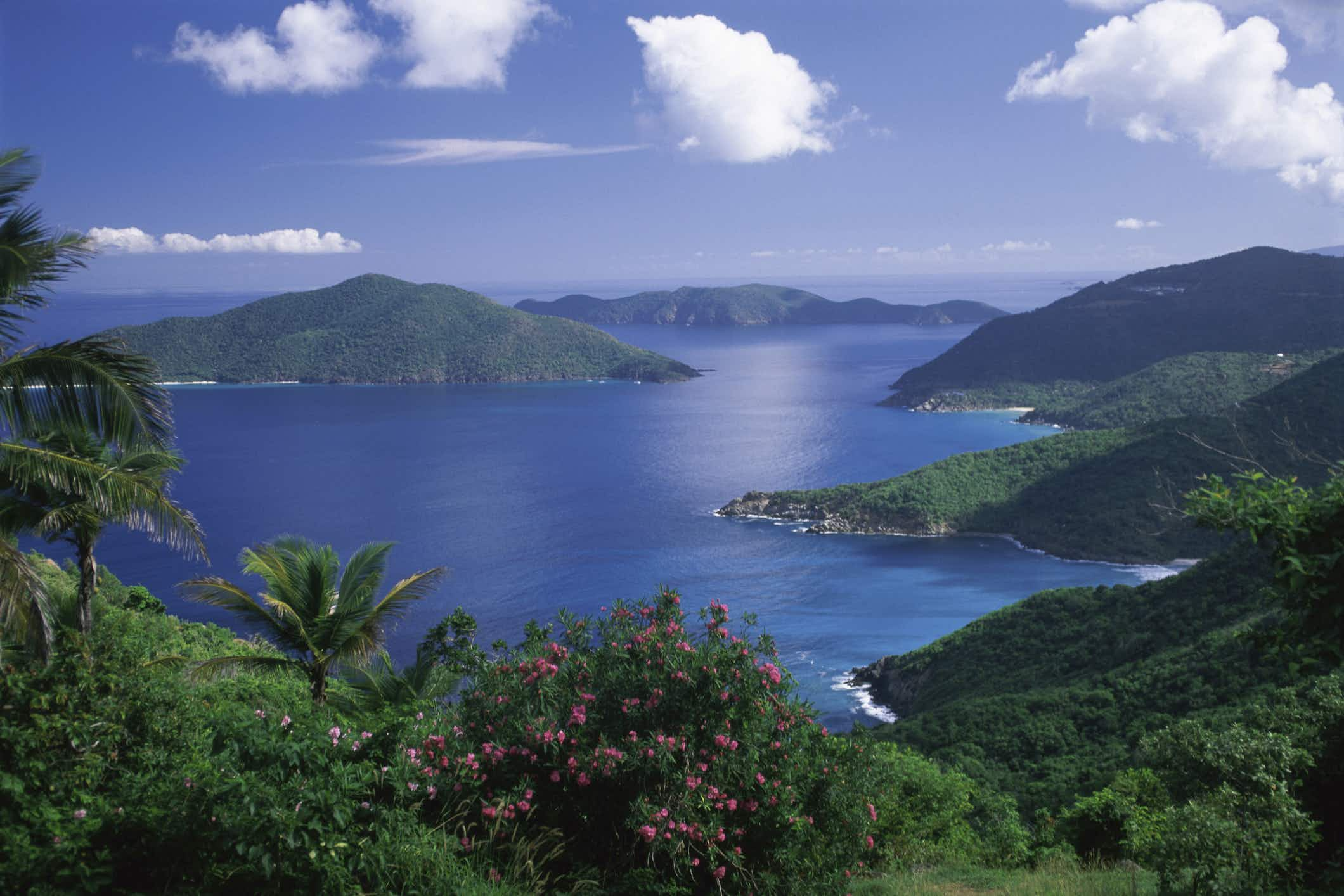 How visitors to British Virgin Islands can get involved with replanting after Hurricane Irma