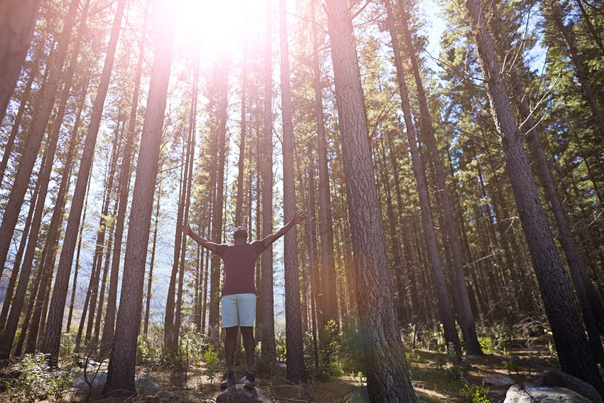 Travel News - Man enjoying sun and trees in the forest