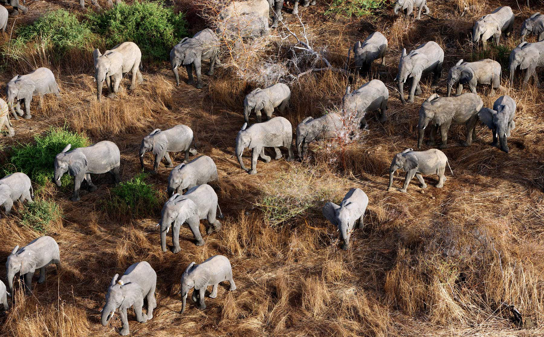 How Chad's Zakouma National Park became one of Africa's greatest conservation success stories