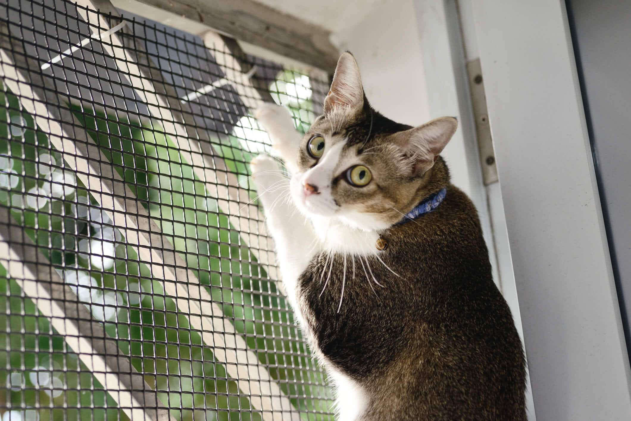 The week-long adventures of a missing cat in JFK airport