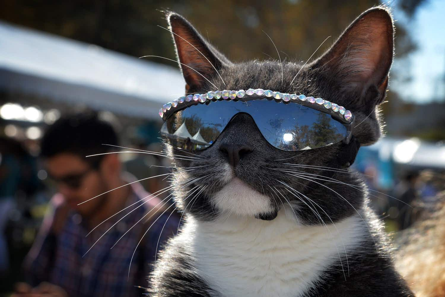 Cat-lovers will be purrfectly delighted with this English festival dedicated to all things feline