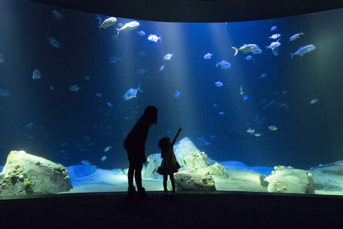 A shark exhibition is set to open at the newly reopened New York Aquarium