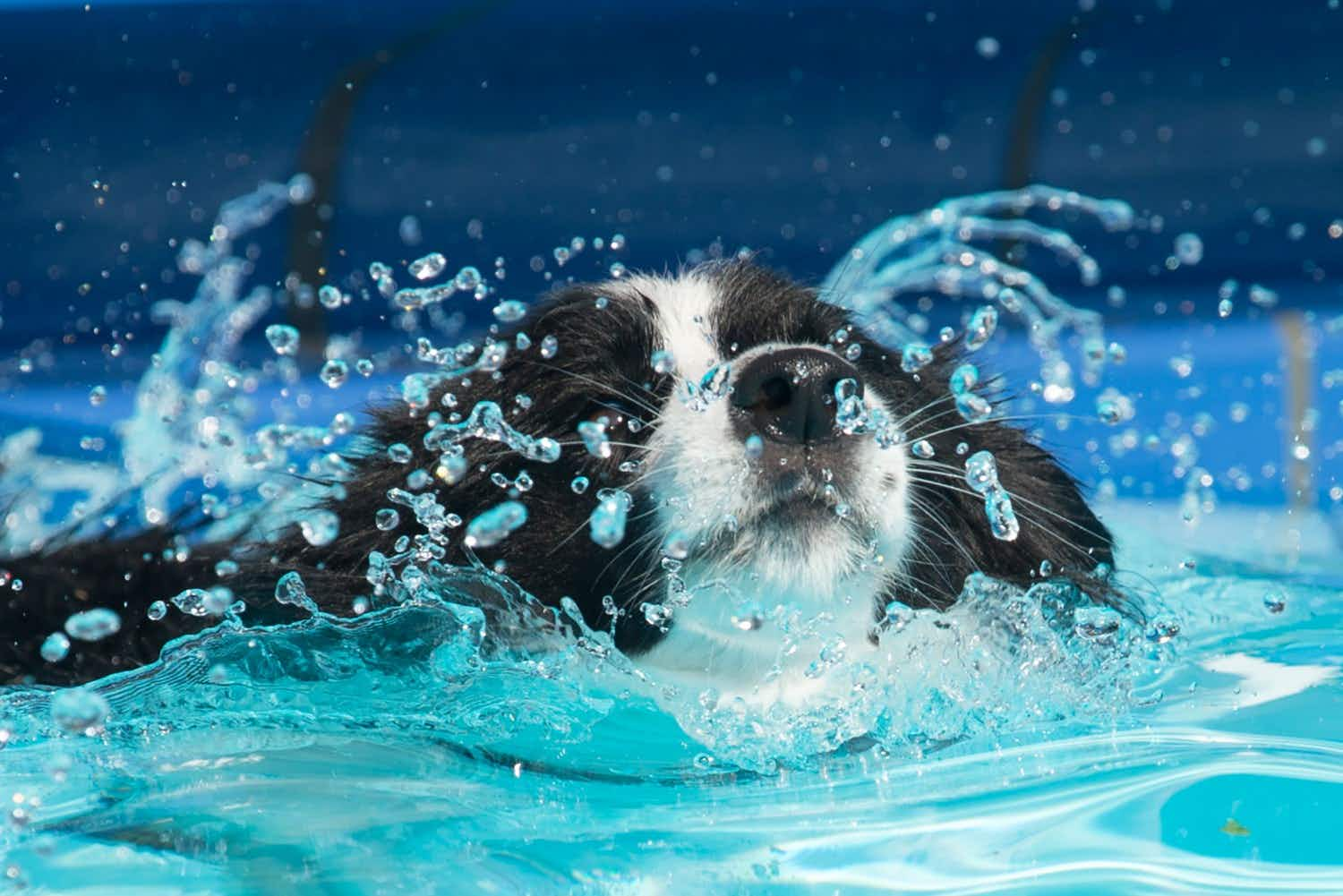 See the doggy-paddle up close at a canine swimming gala in London