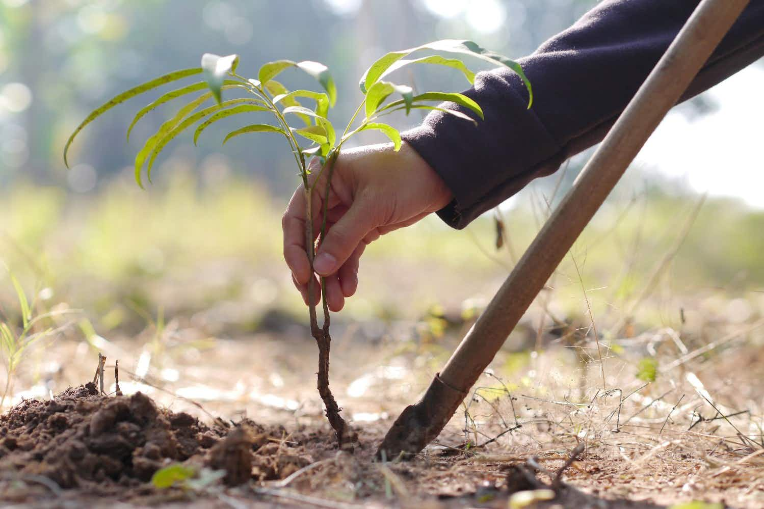 One dedicated man has planted a tree every day since 1979 to create a forest in India