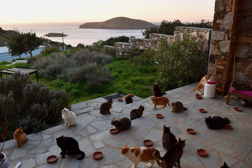 This job will take you to an idyllic Greek island to take care of cats