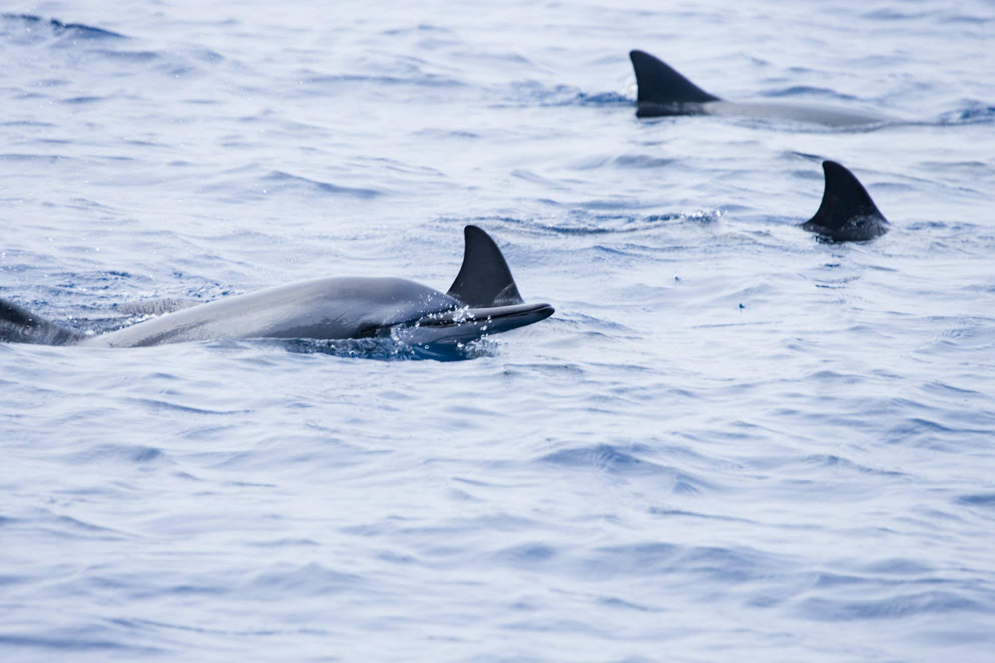 A rare whale-dolphin hybrid has been discovered off the coast of Hawaii